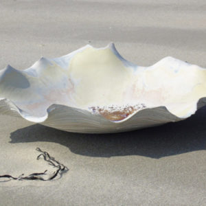 coquillage in situ
