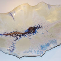 coquillage porcelaine 4