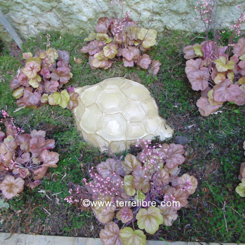 3 - carapace de tortue